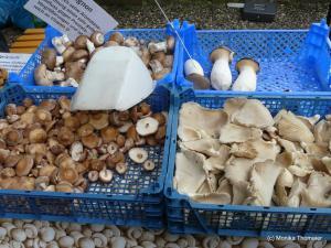 Austernpilz Shiitake