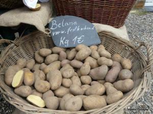 Kartoffel Belana