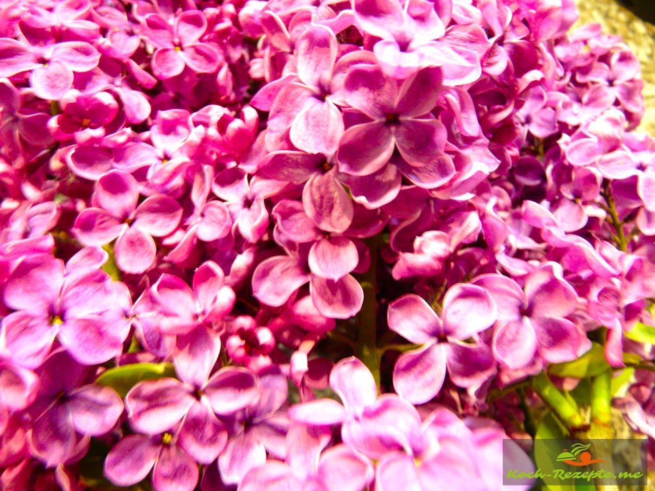 Blüten abzupfen