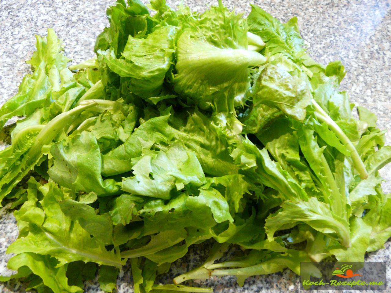 frischer Romanasalat aus dem Garten