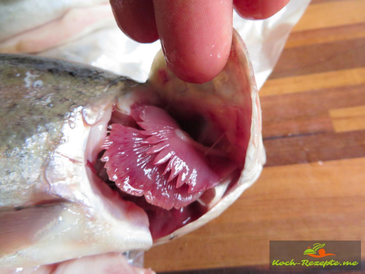 das die Forellen frisch sind sieht man, wenn man den Kiemendeckel öffnet und dann sehr rote Kiemen sehen kann