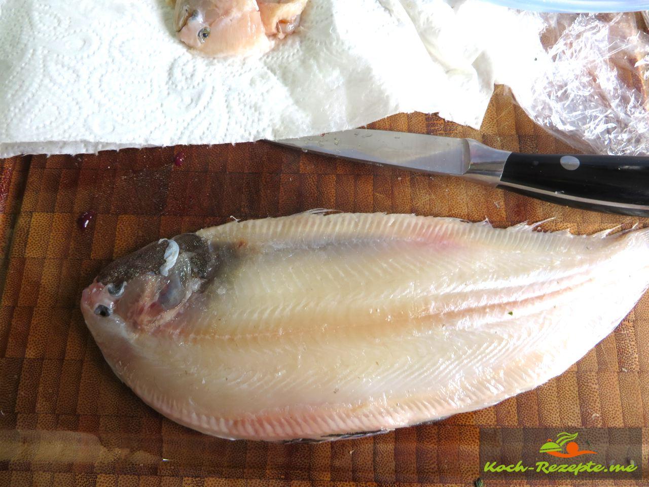 Plattfisch oder als Scholle bekannt gehäutet und Küchenfertig