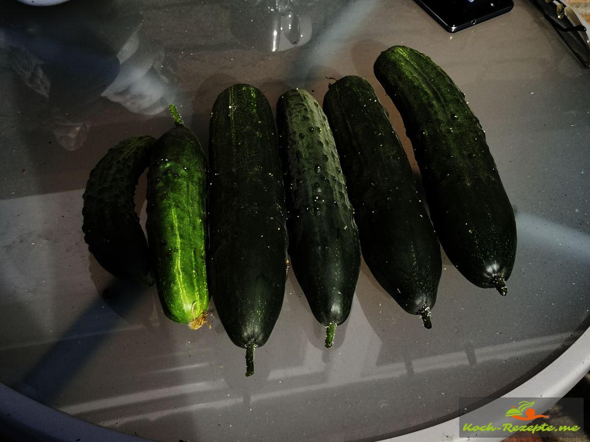 eigene Salatgurkenernte